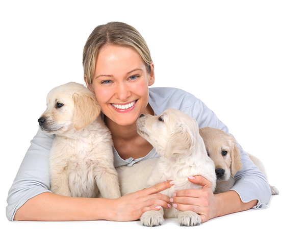 Woman breeder with three Golden Retriever puppies