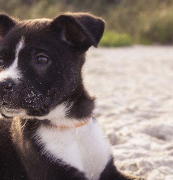 Keeping Your Dog Safe This Summer