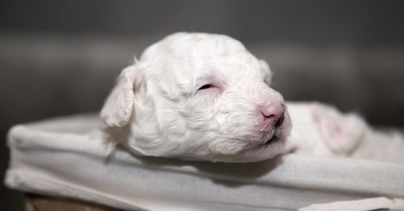 Why the First Weeks of Your Puppy's Life Are the Most Important