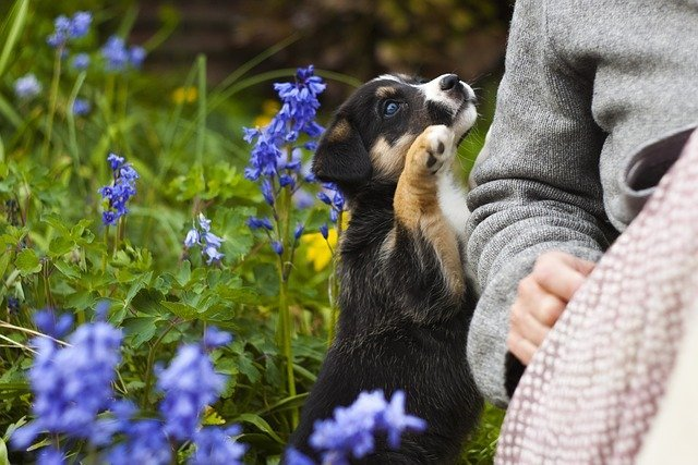 Puppy with new owner gazing