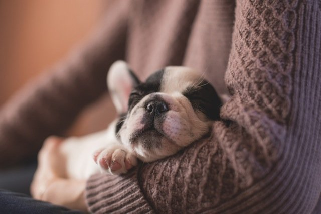 How to Care for Your Puppy's Psychological Needs