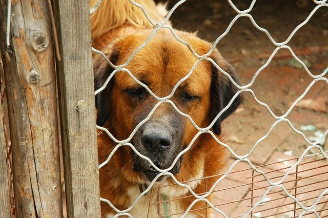 3 Ways You Can Avoid Puppy Mills