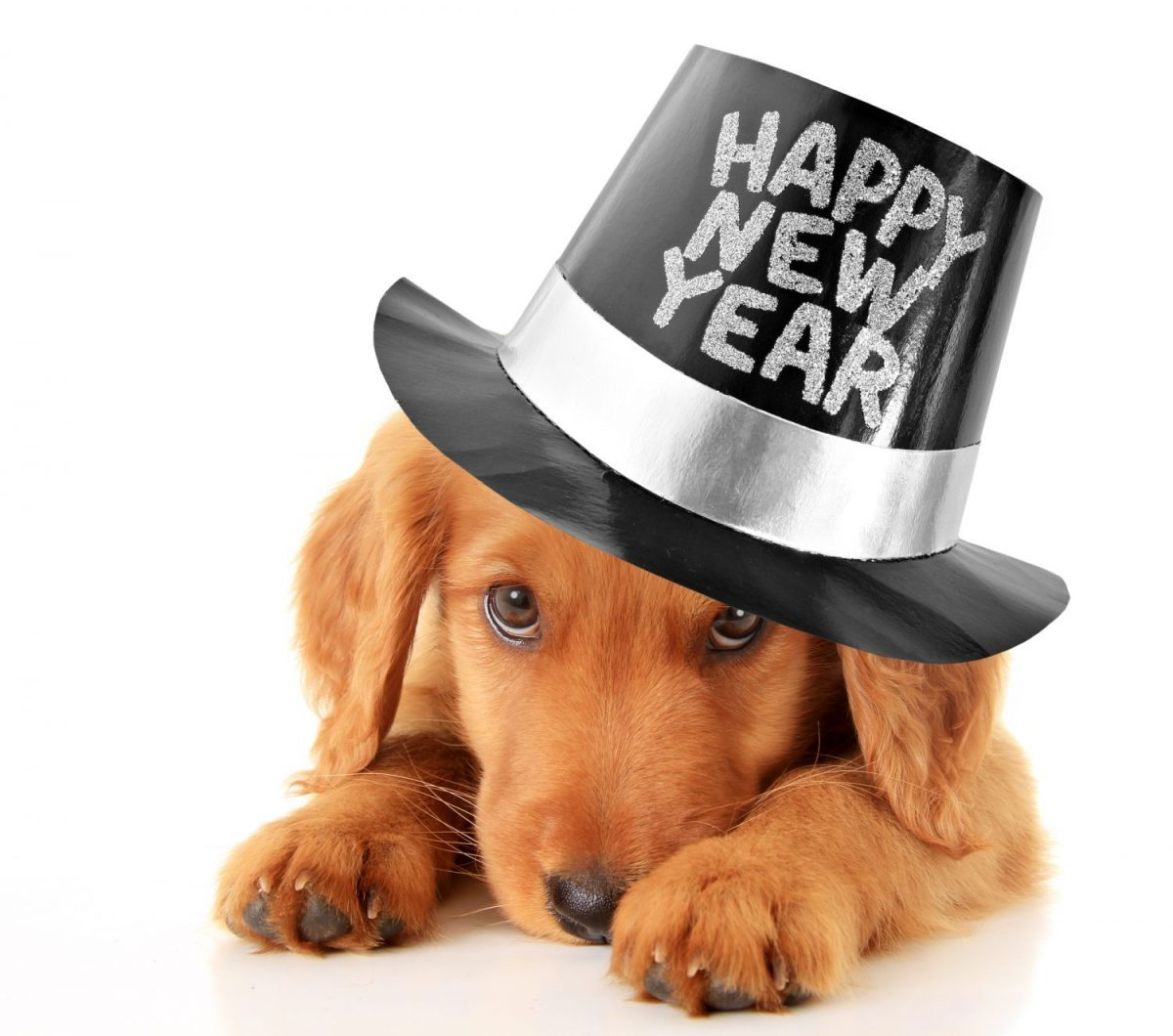5 New Year's Resolutions to Show Your Puppy Love Every Day