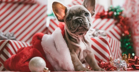 How to Puppy Proof Your Home for the Holidays