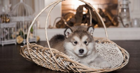 3 Quick Ways to Keep Your Puppy Warm This Winter