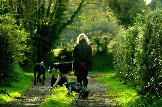 Dogs and their breeder in woods