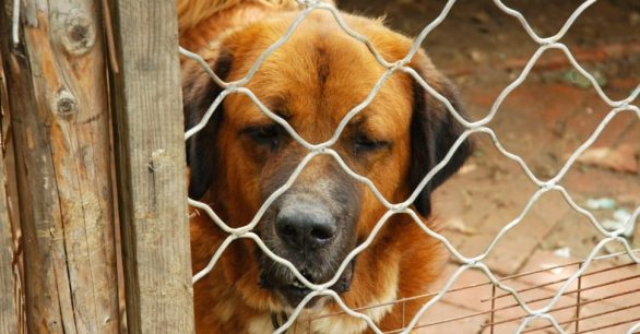 How To Report Puppy Mills & Scams