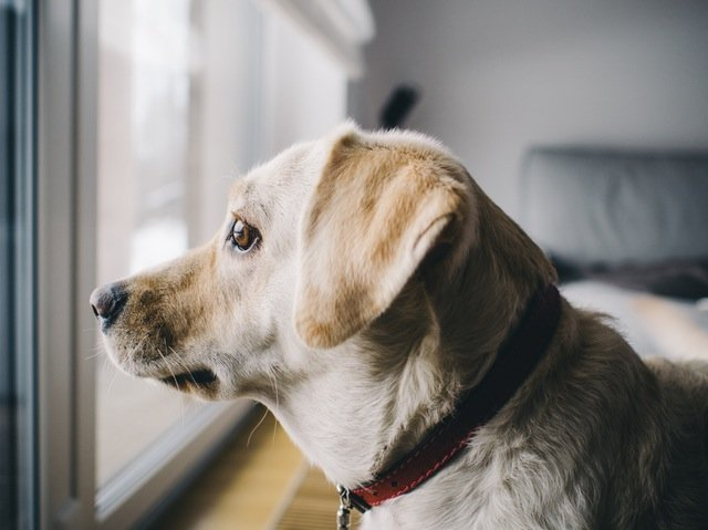 How to Help Your Puppy's Separation Anxiety