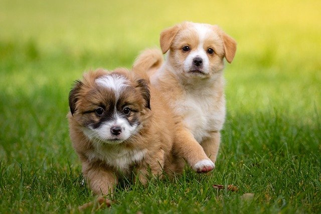 beautiful puppies playing in the yard