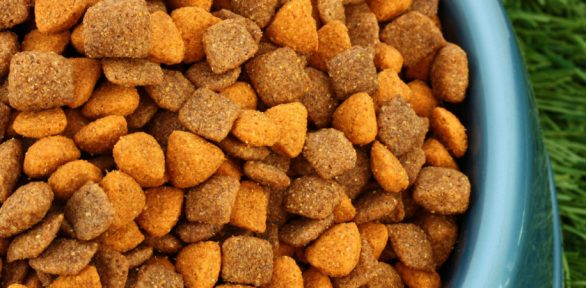 Why the Brand of Puppy Food Makes a Difference