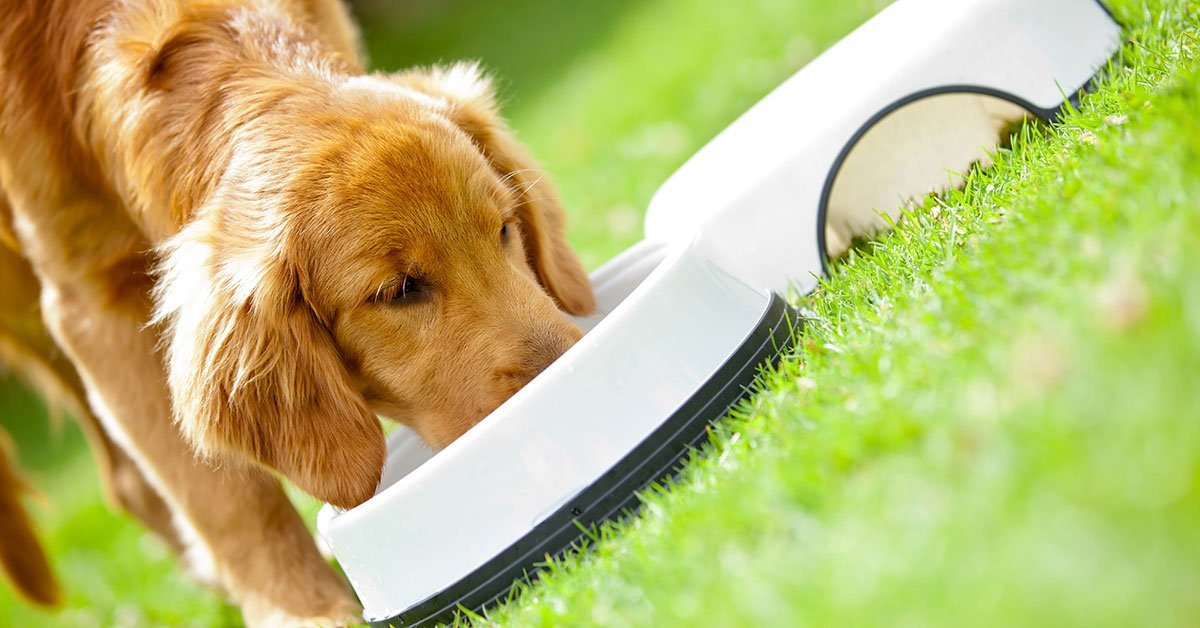 What to Consider Before Purchasing a Puppy