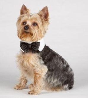 A bowtie your dog will look great in