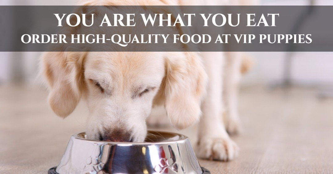 Order high quality dog food online at the VIP Puppies pet store.