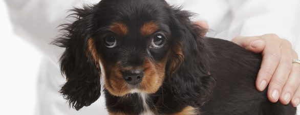 Food to Keep Away From Your Puppy – Part 2