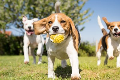 Puppy Training Basics For The New Dog Owner
