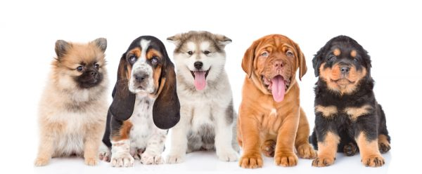 Find the perfect puppy with our dog breed selector tool.