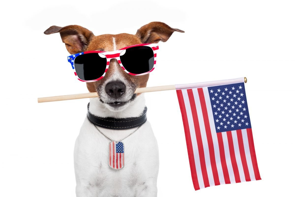 Dog dressed up to celebrate July 4th.