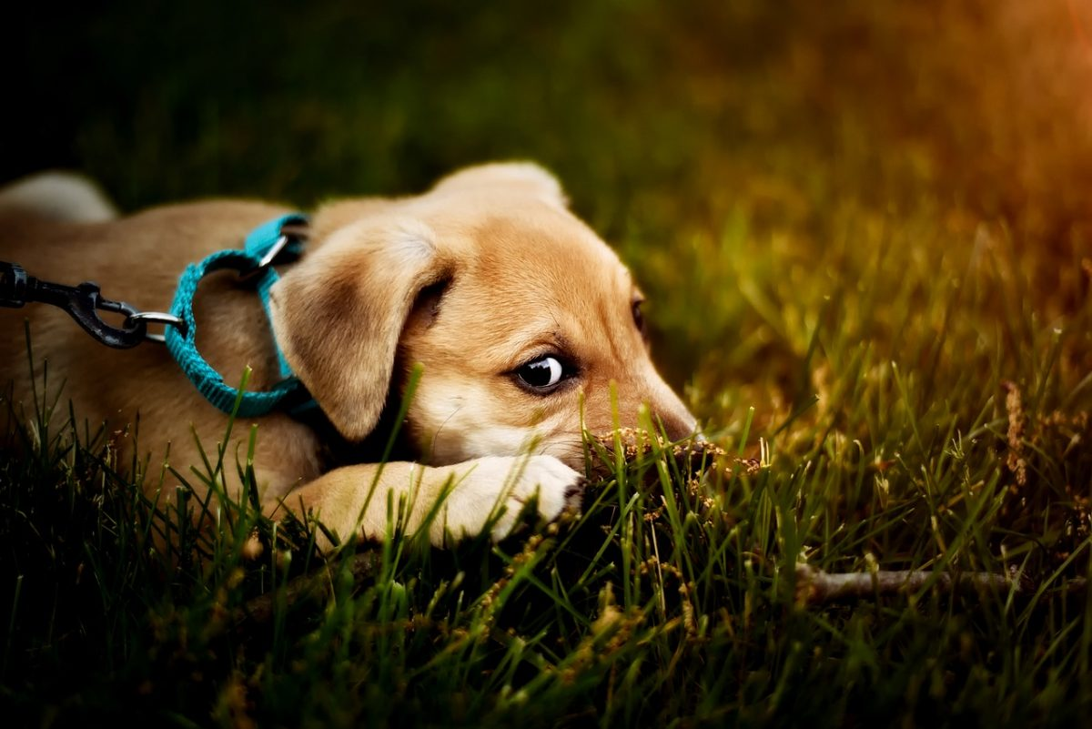 What You Should Know About Puppy Obedience Training