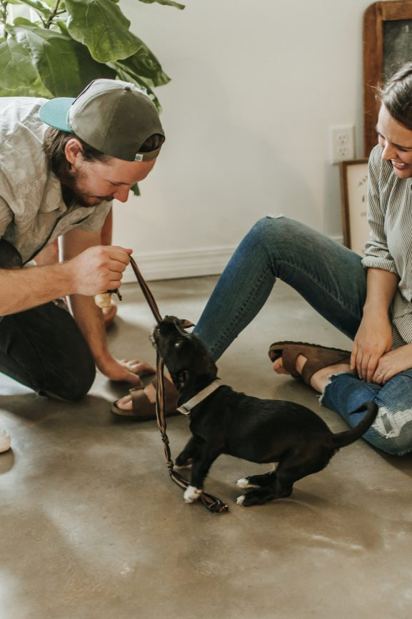 Puppy obedience training should be a family affair as the puppy needs to learn to obey everyone.