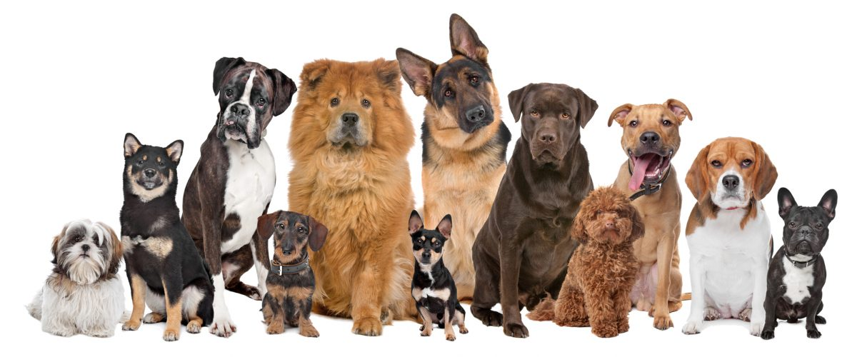 What Size Dog Breed Is Best For You?