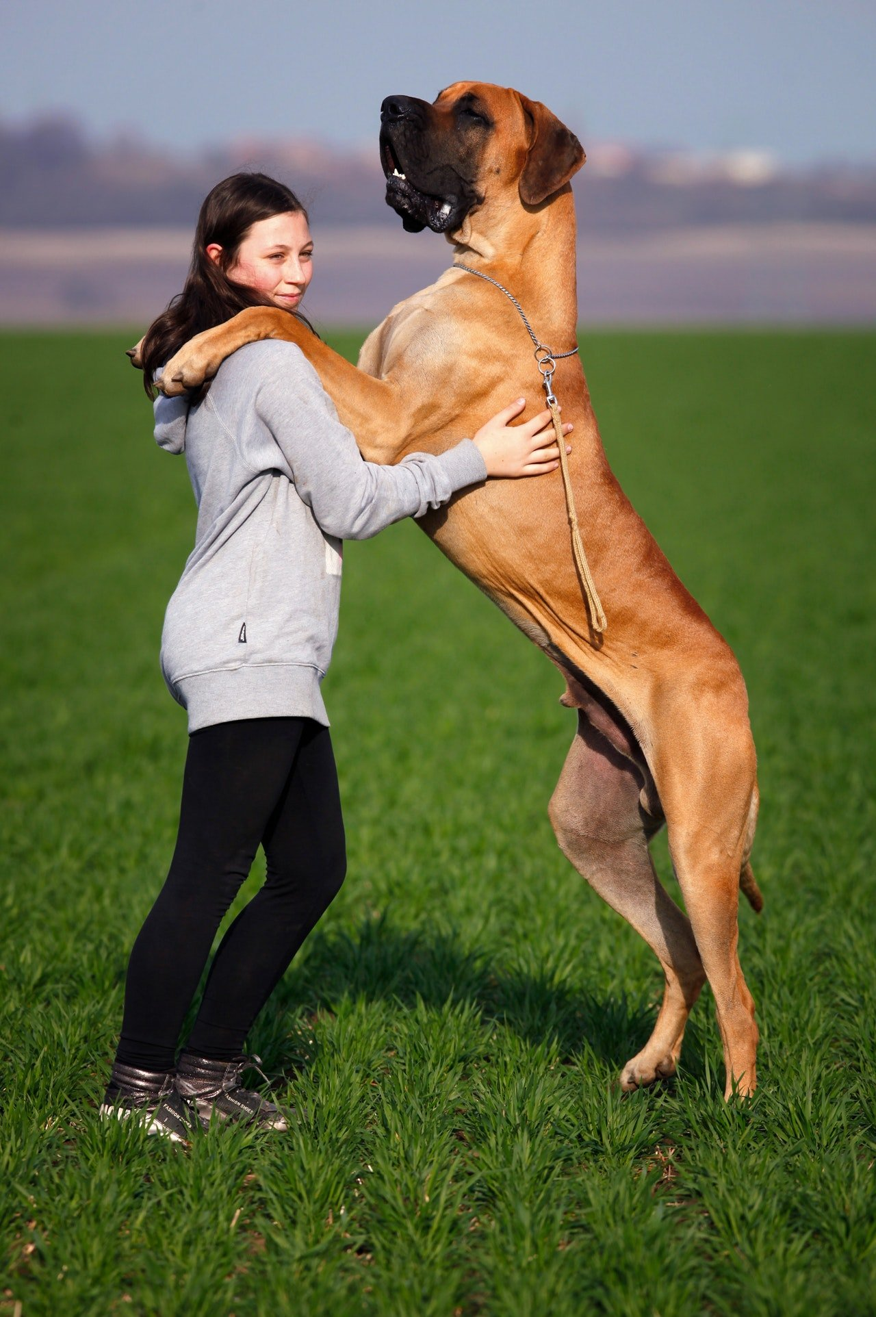 Find your own huge dog breed.