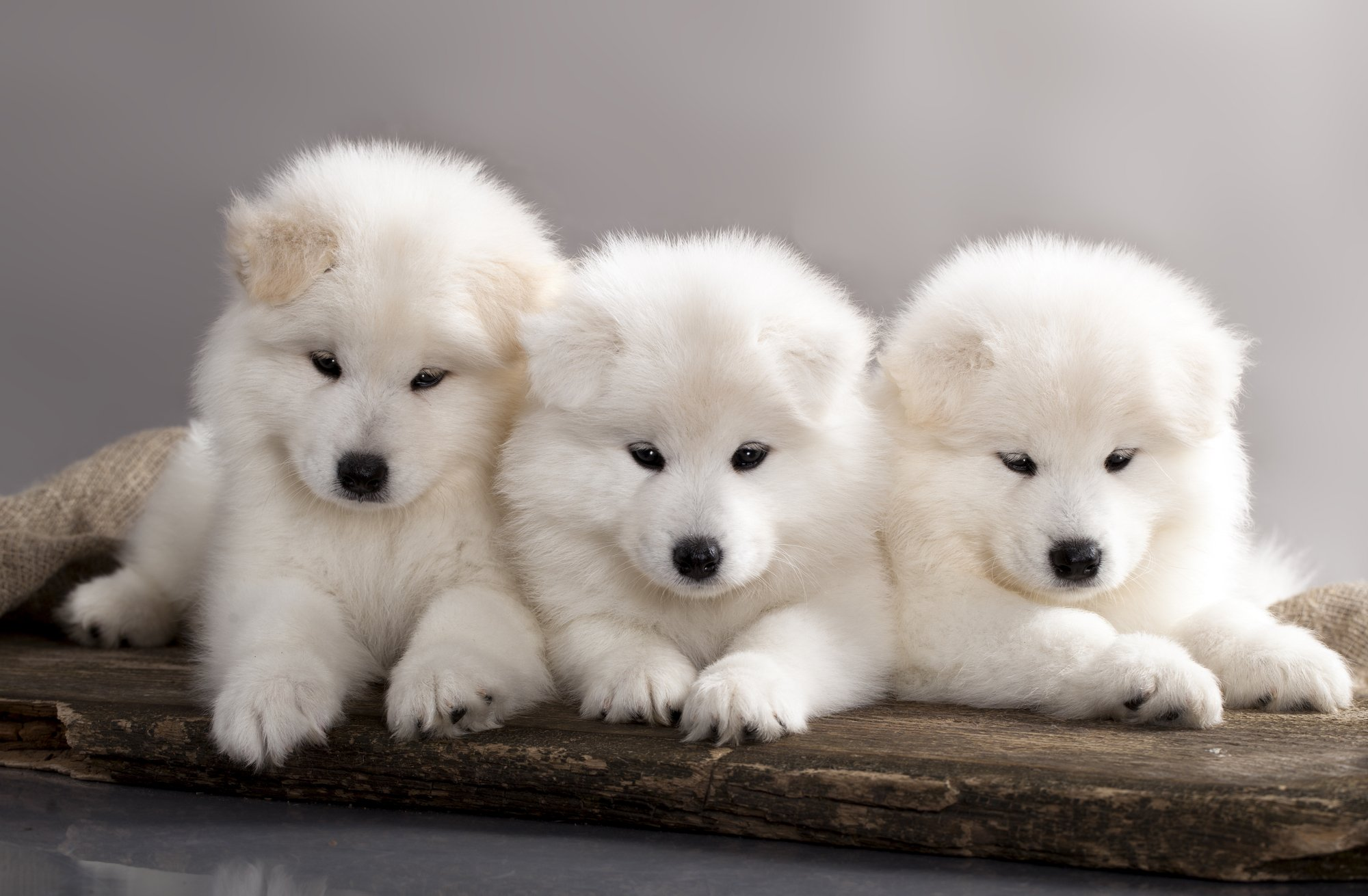 Find cute fluffy dog breeds here.