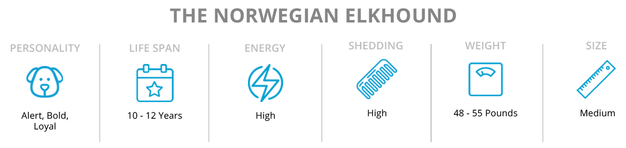 Facts about Norwegian Elkhound dogs and puppies.