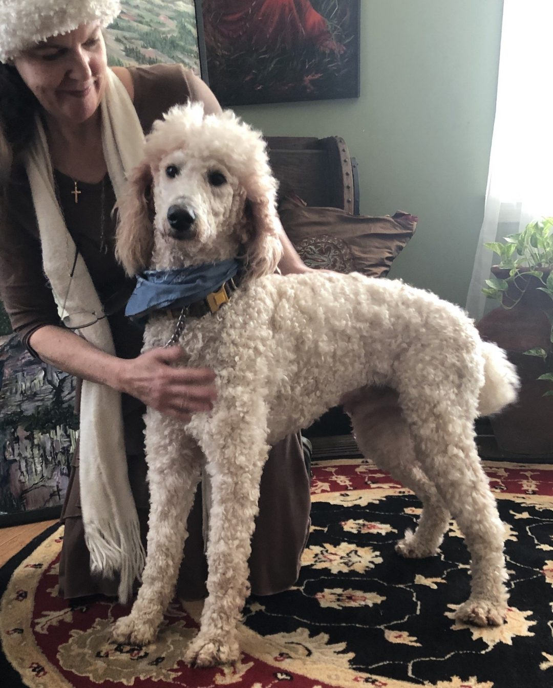 Dusty Fletcher - A male Goldendoodle puppy for sale in Greenville, South Carolina