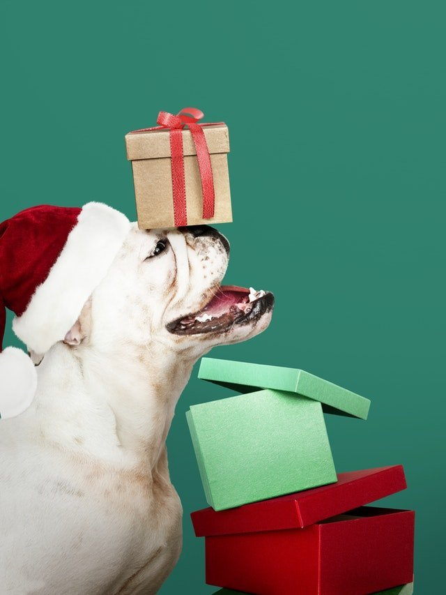 Give a puppy as a Christmas gift.