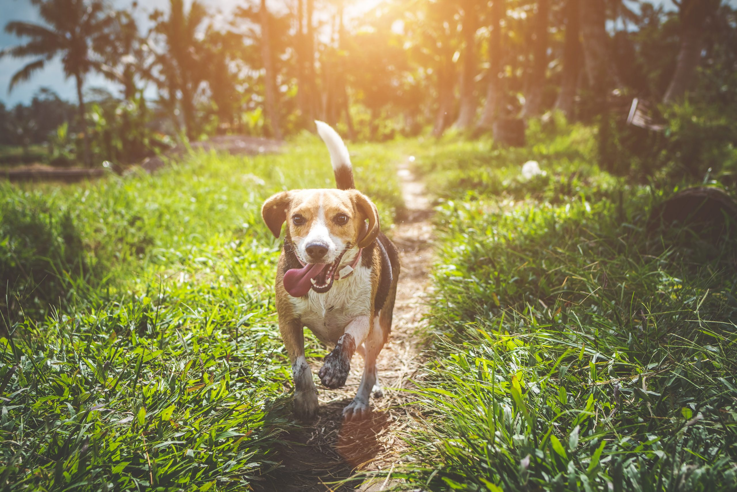 Providing Your Pup With a Life They Love (FAQ)