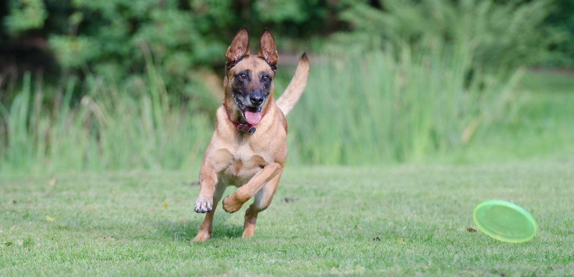 Make your dog happy with a Frisbee game.