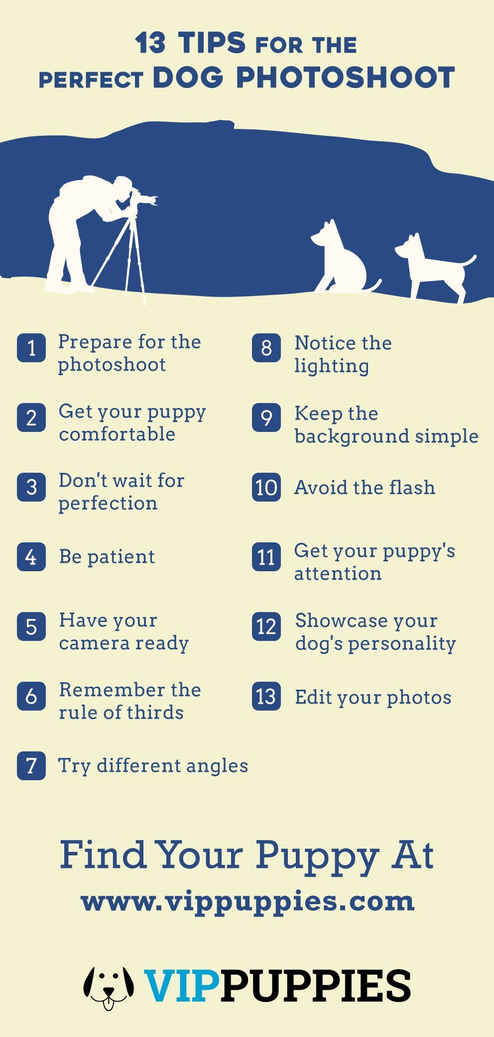 13 Tips for the Perfect Dog Photoshoot