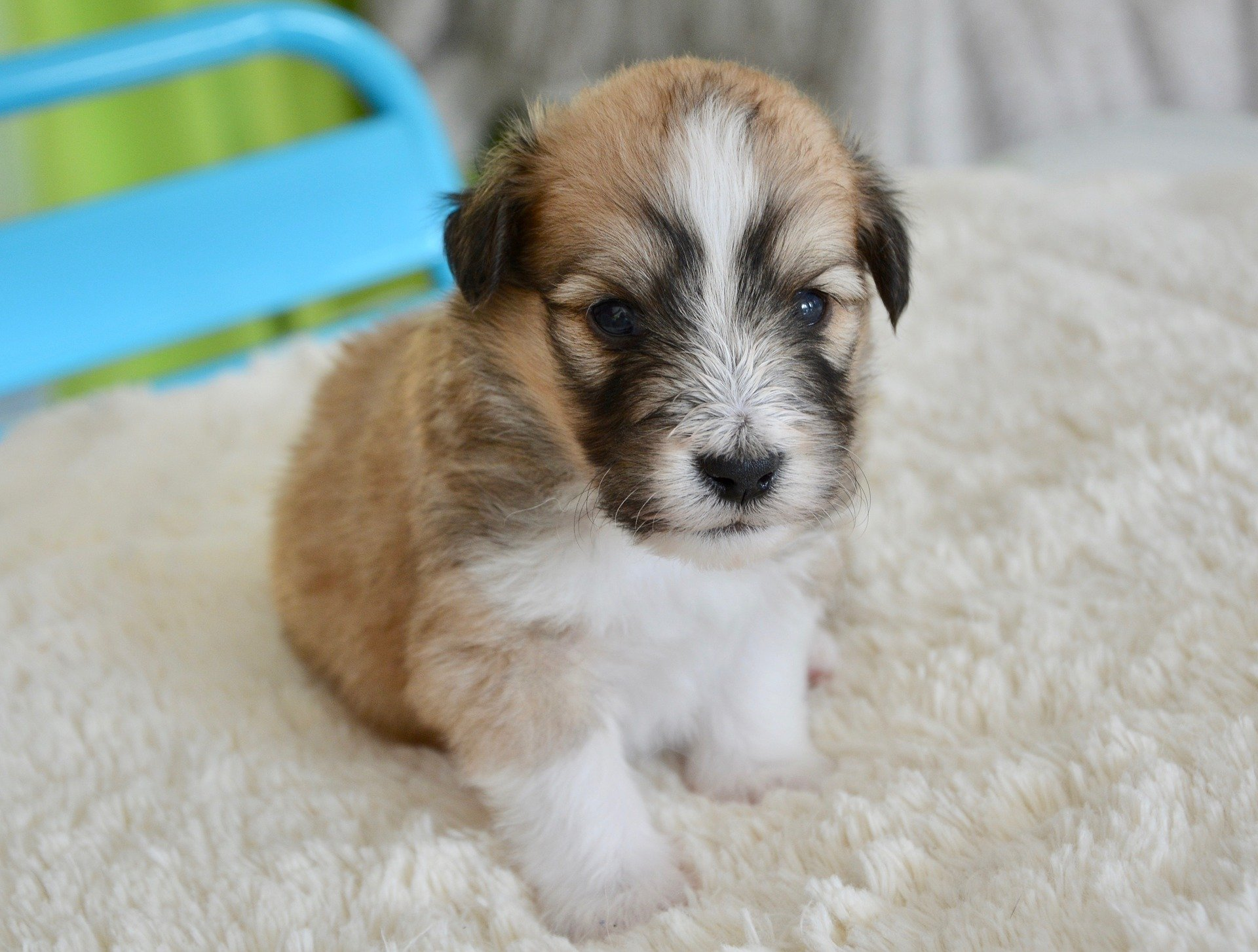 Puppy Names For Boys 1 000 Fantastic Name Ideas Vip Puppies