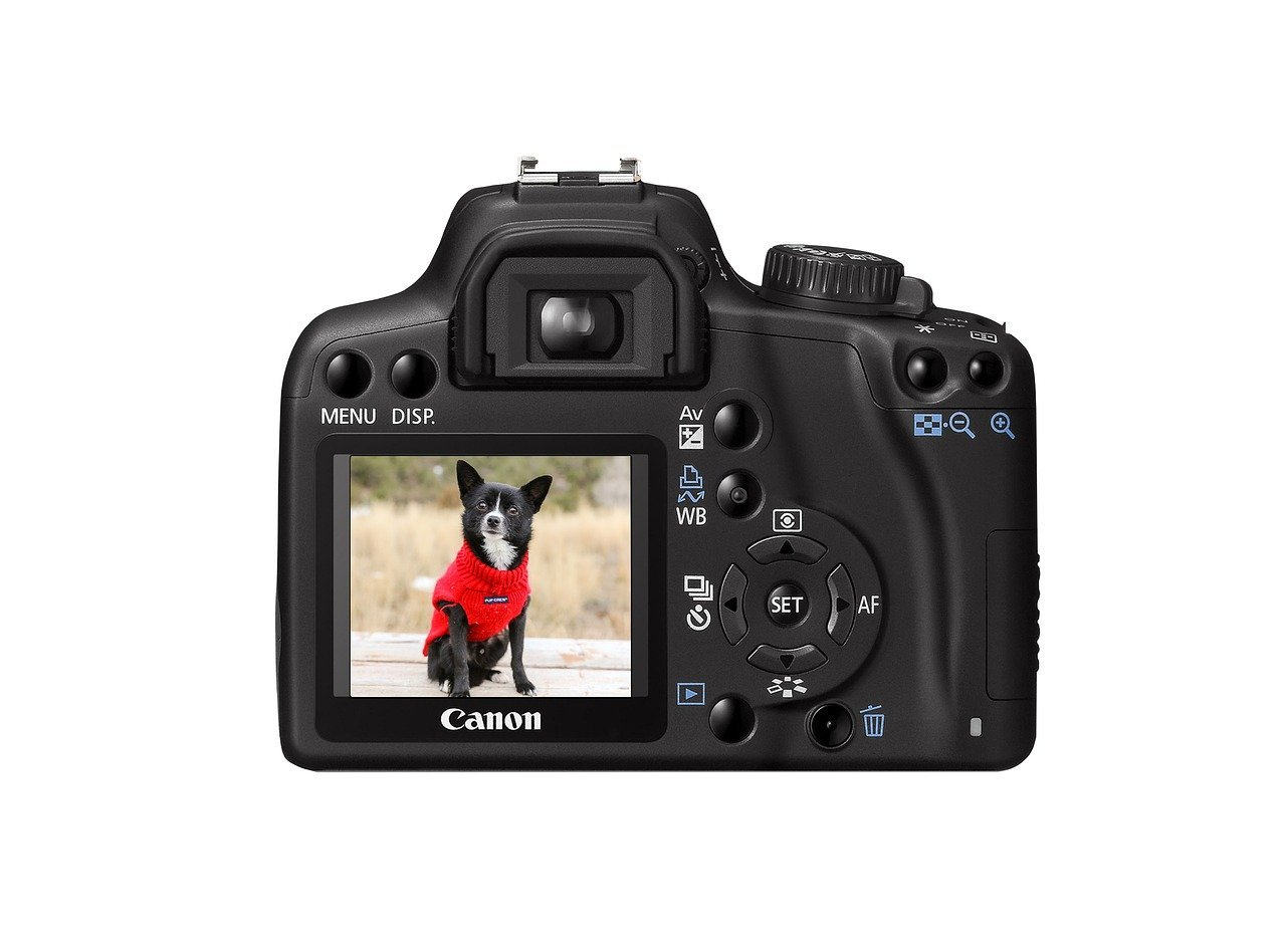 Dog outdoors with red sweater in Canon camera viewfinder