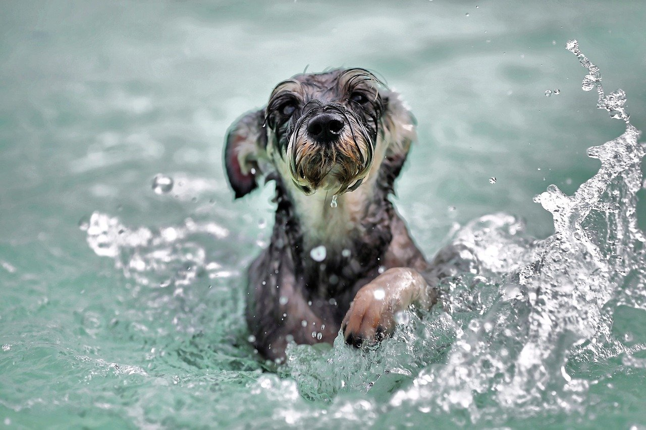 Cute puppy swimming and having fun in water.