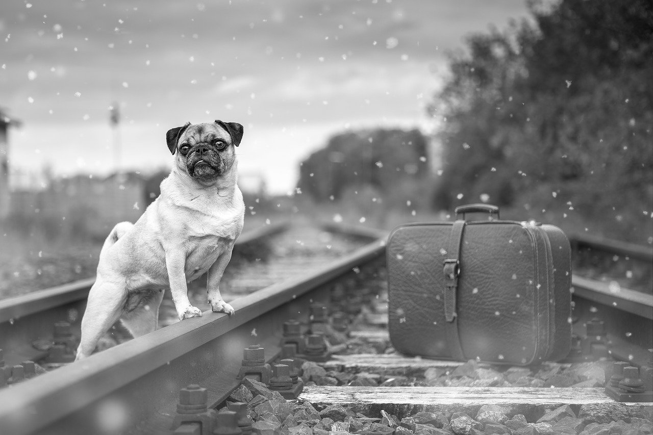 Pug dog and suitcase on the train tracks