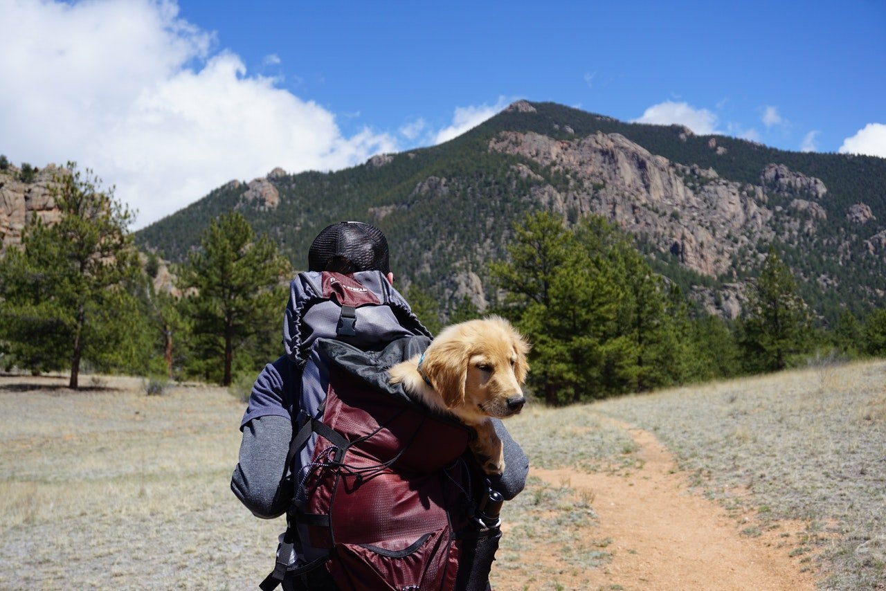 Man with dog in backpack walking towards mountain