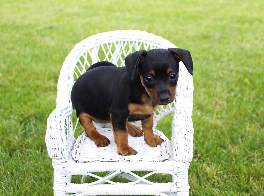 Puppy Stores & Places [Puppies On Sale Near Me] | VIP Puppies