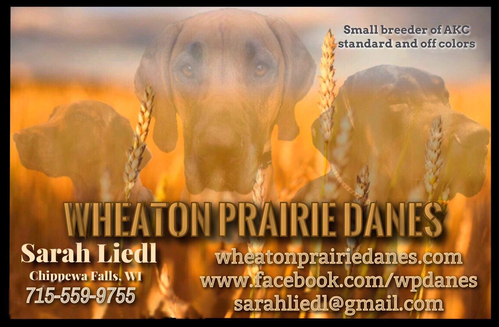 Dog Breeder Near Me [Dog Breeder with Puppies on Sale]   VIP