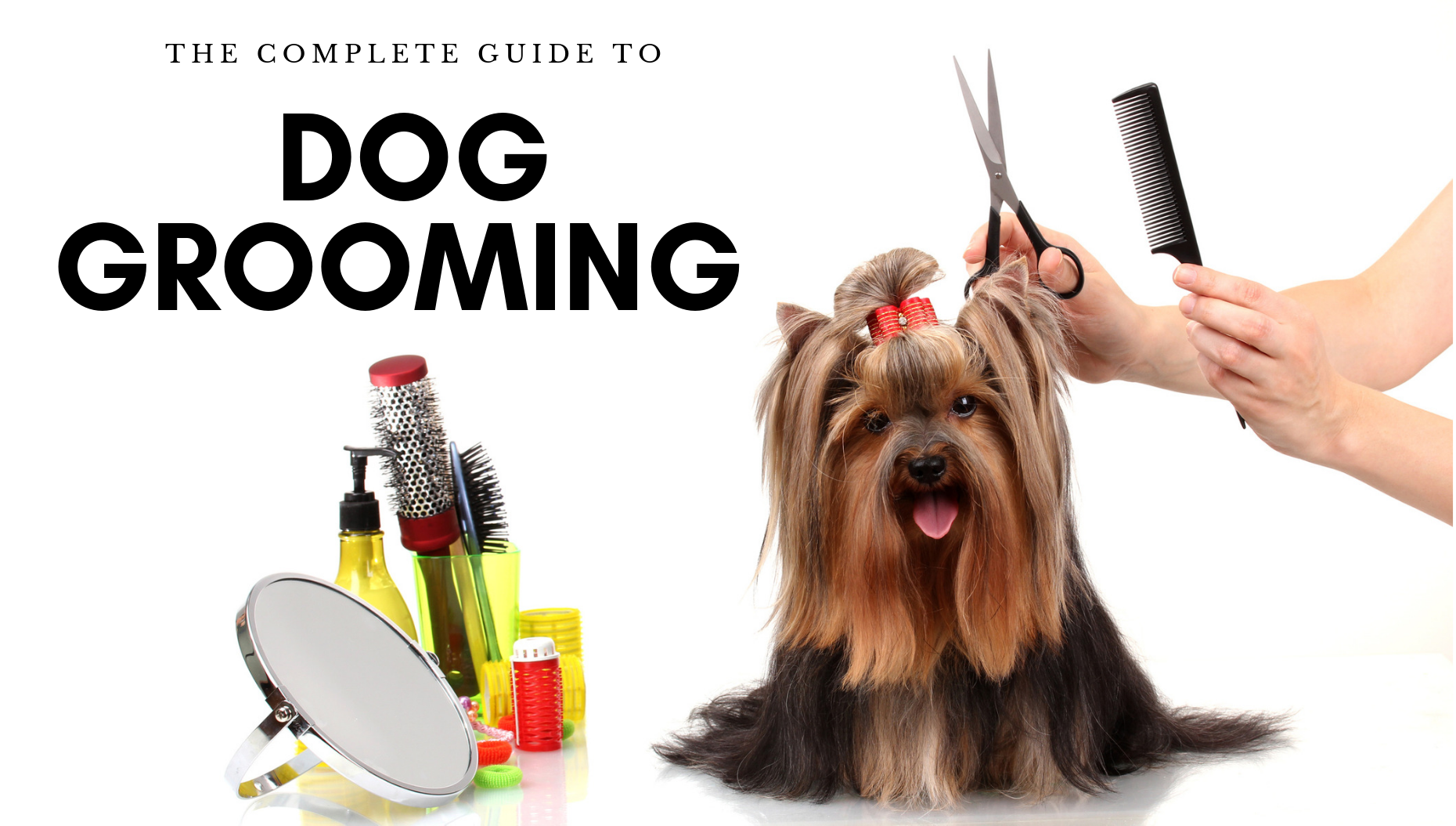 The Complete Guide to Dog Grooming (DIY + Video)