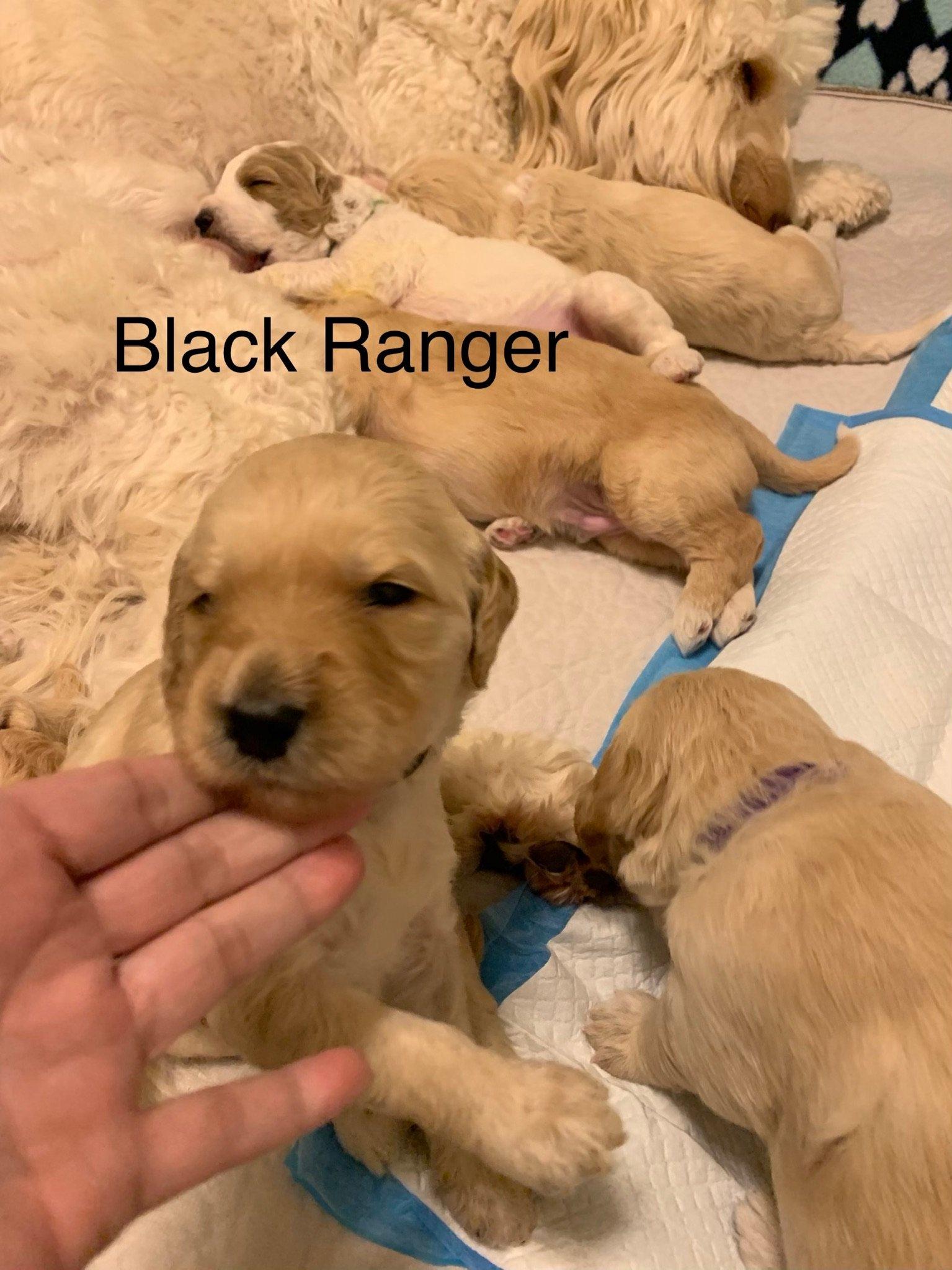 F2bb – Black Ranger