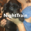 Night Train - Louisiana Catahoula Leopard pups for sale in Bethel Springs, Tennessee