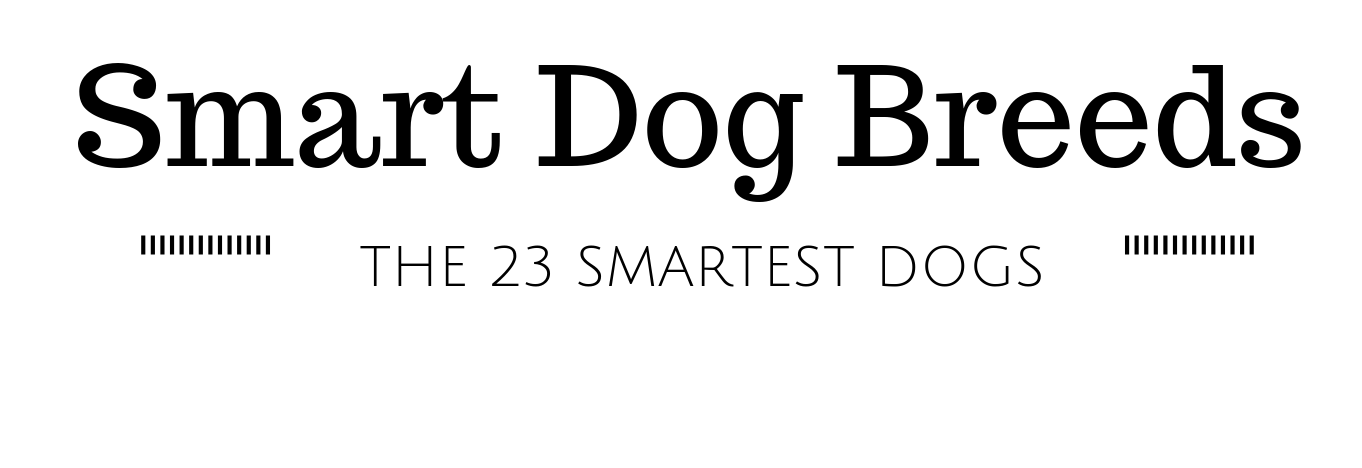 23 Smart Dog Breeds