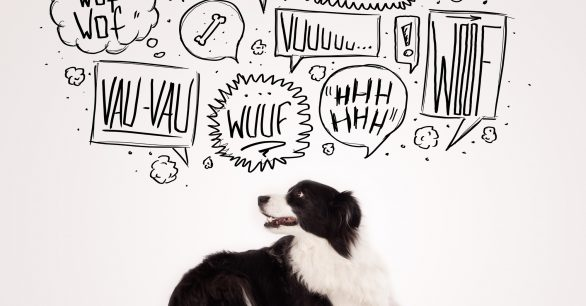 Dogs Barking: What They are Trying to Say and How to Quiet Them