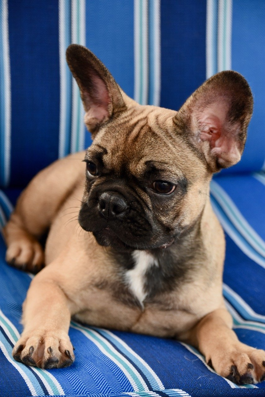 Dog Breeders Near Me - Find a Breeder Near Me Today | VIP ...