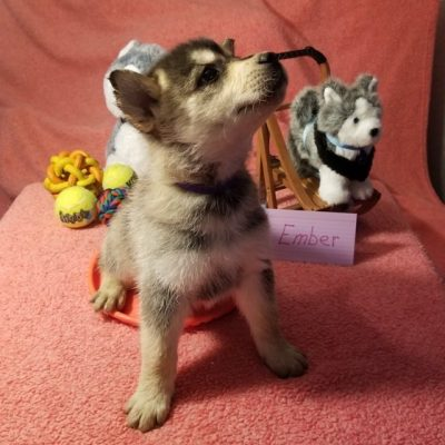 Cheap Puppies for Sale - Find Cheap Puppies On Sale Now
