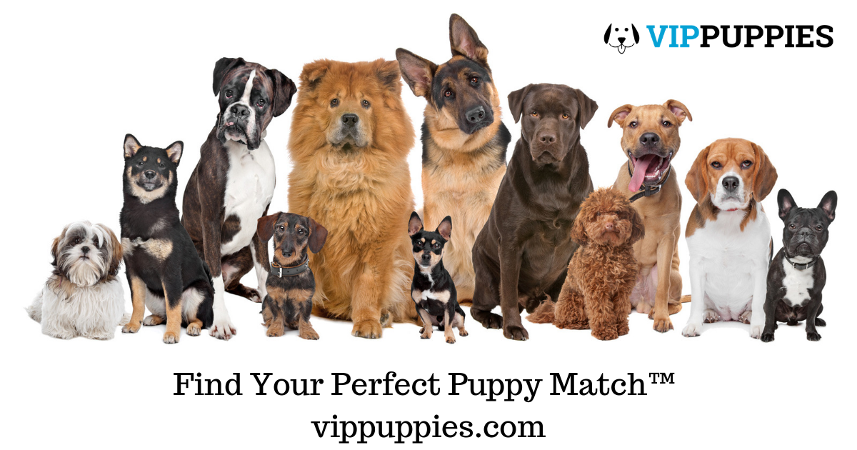 Puppy Finder [Healthy Dogs & Puppies for Sale] - VIP Puppies