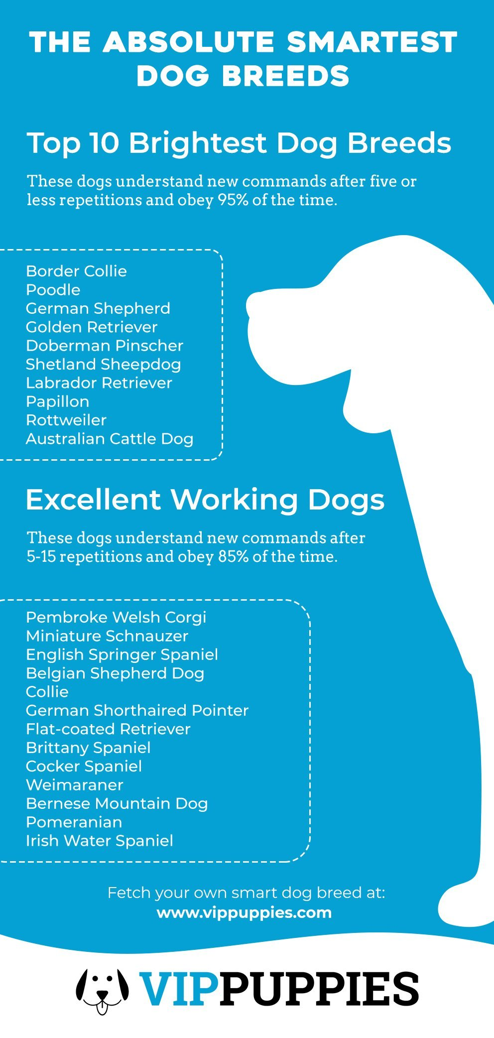 The Absolute Smartest Dog Breeds Infographic