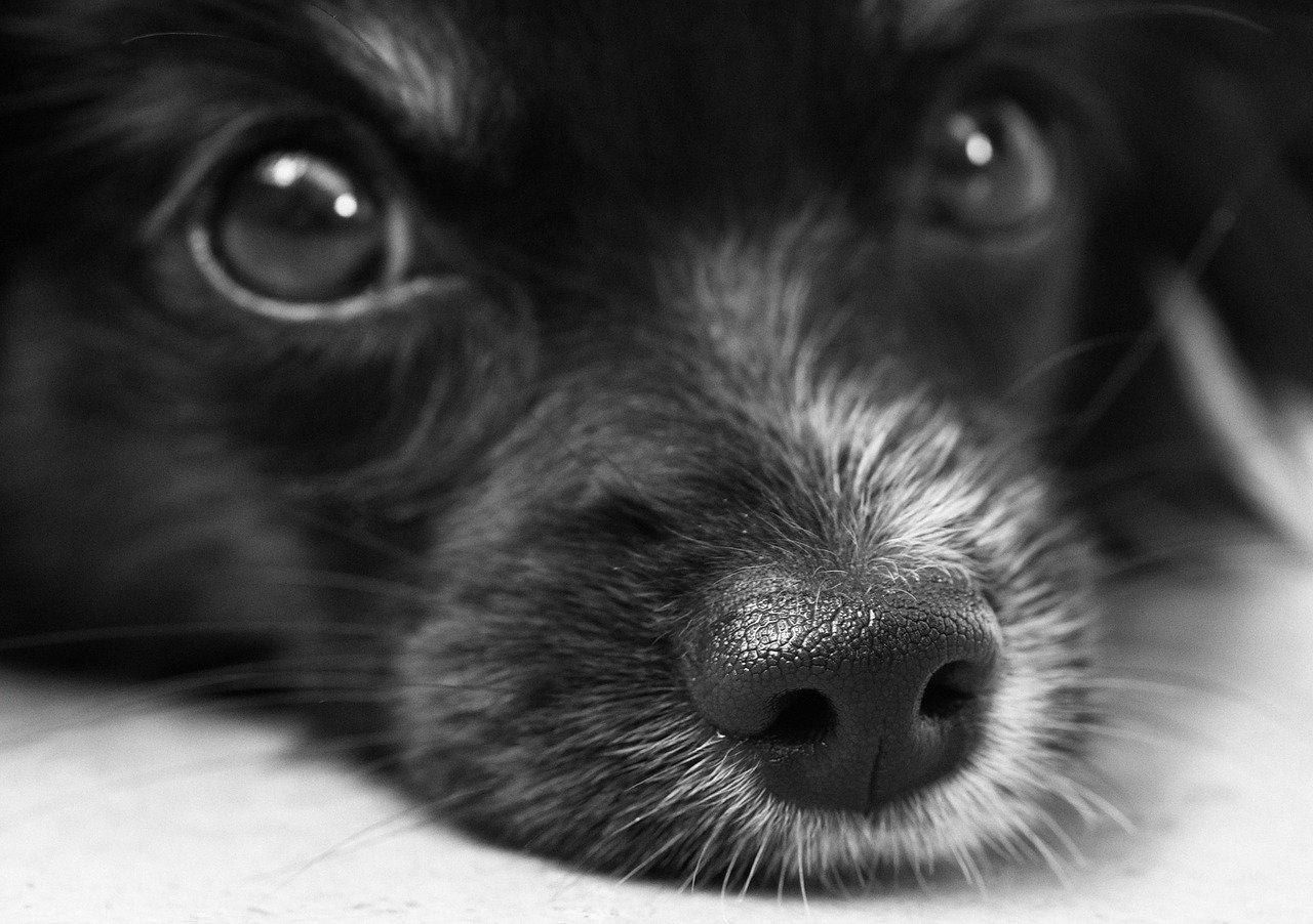 close up of a little pupper's face