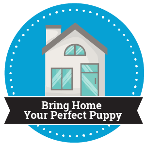 Step 3 - Bring Home Your Perfect Puppy